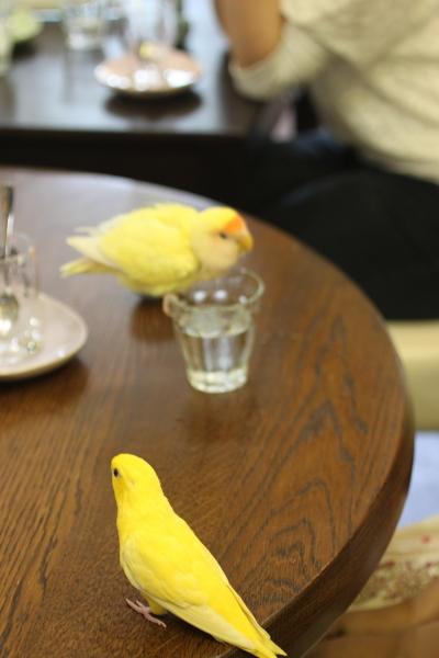 幸せの黄色い鳥たち