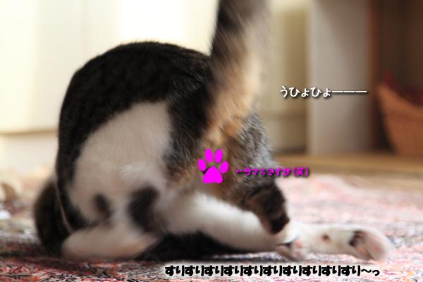 2010052615.jpg