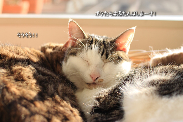 20110326-10.jpg