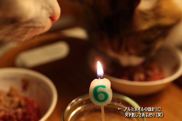20110521-12.jpg