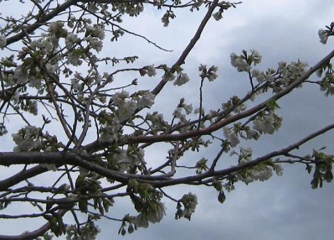 2010-03-16-4.jpg