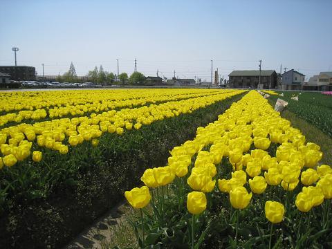 2010-04-30-3.jpg