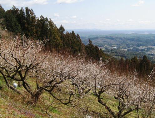 2012-03-11-6.jpg