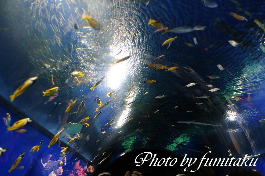 海遊館 (1)