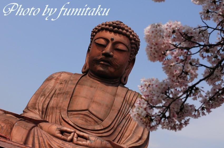 聚楽園桜大仏様 (8)