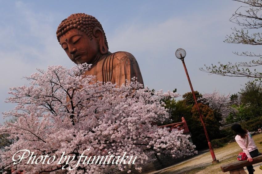 聚楽園桜大仏様 (3)