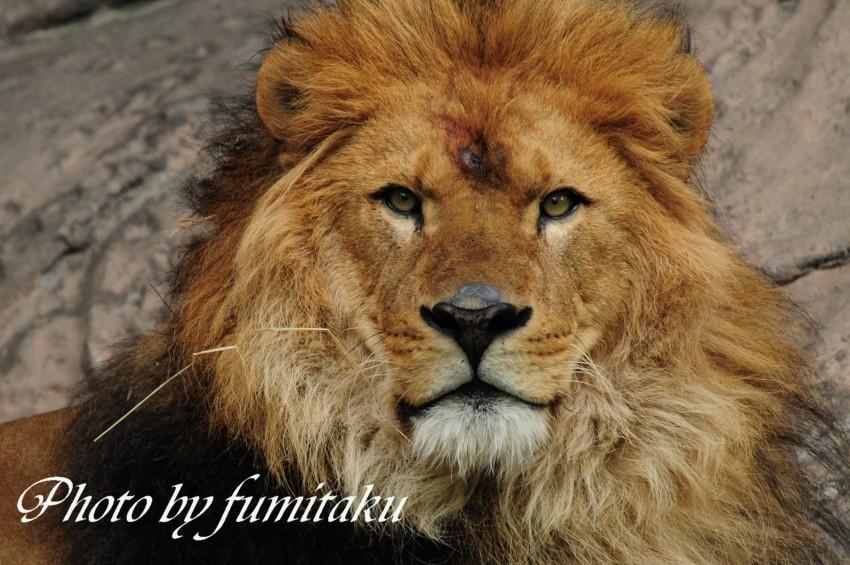 東山動物園430 (3)