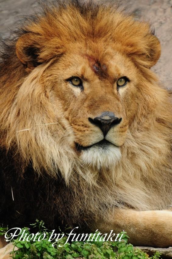 東山動物園430 (13)