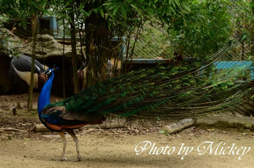 東山動物園430 (1)