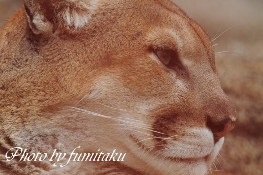 東山動物園430 (40)