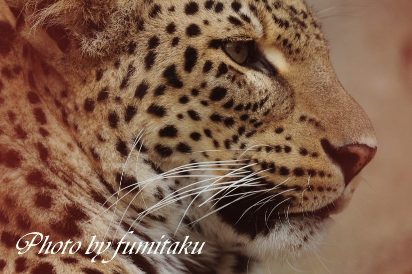 東山動物園430 (36)