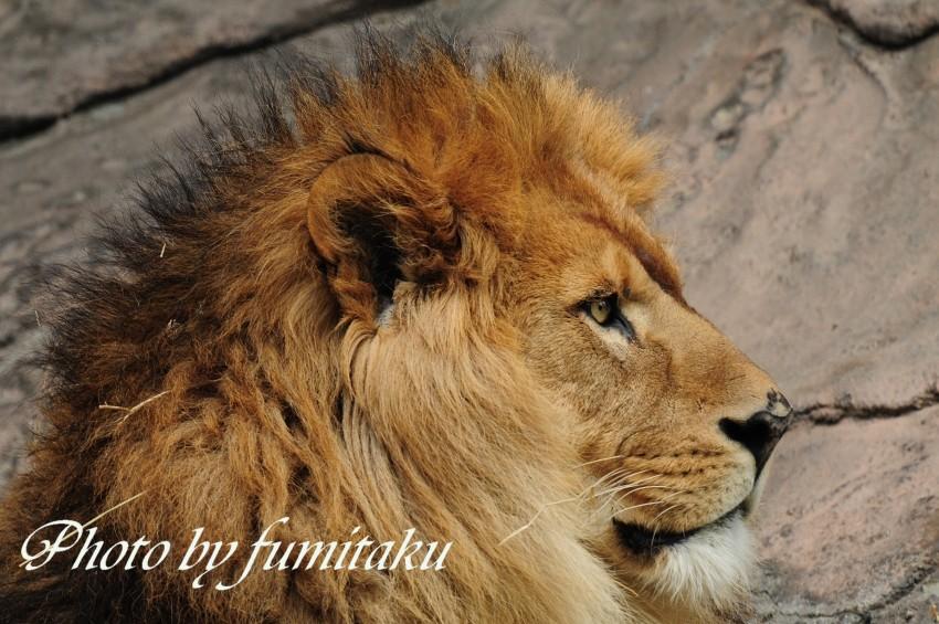 東山動物園430 (8)