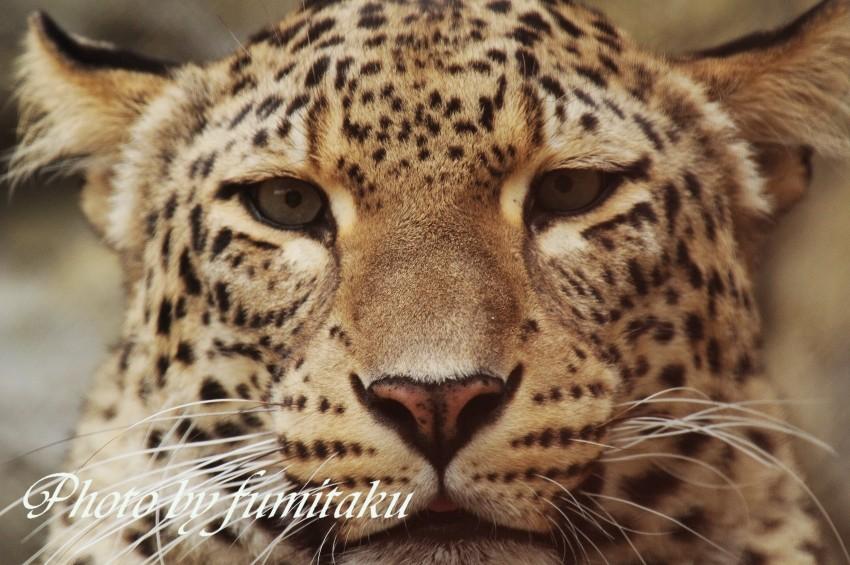東山動物園430 (20)