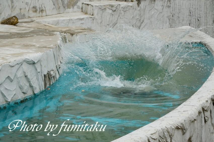 東山動物園430 (28)