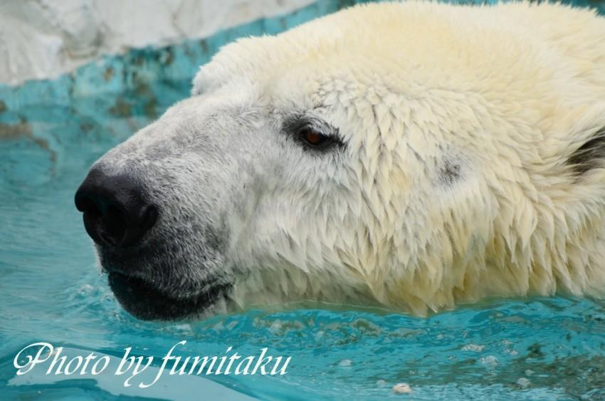東山動物園430 (31)