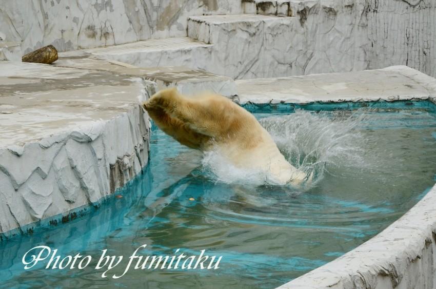 東山動物園430 (26)