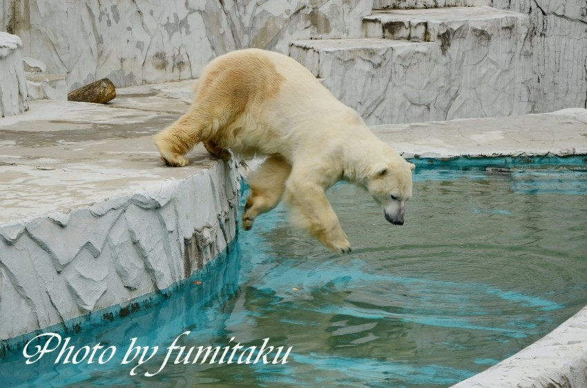 東山動物園430 (24)