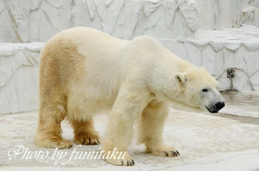 東山動物園430 (21)