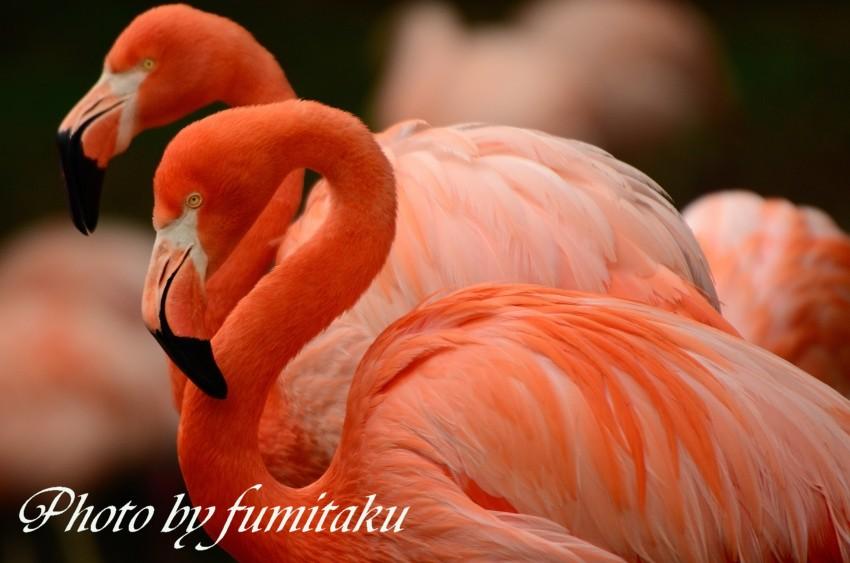東山動物園430 (49)