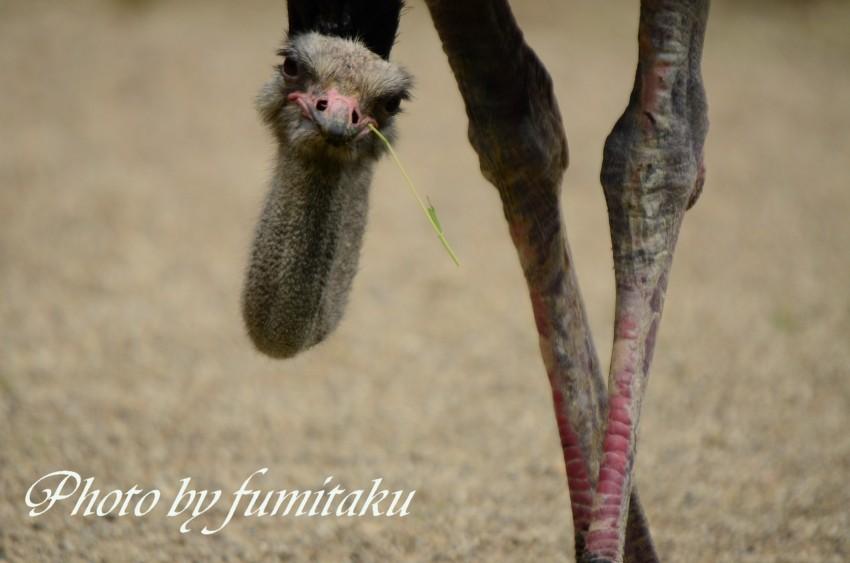 東山動物園430 (45)