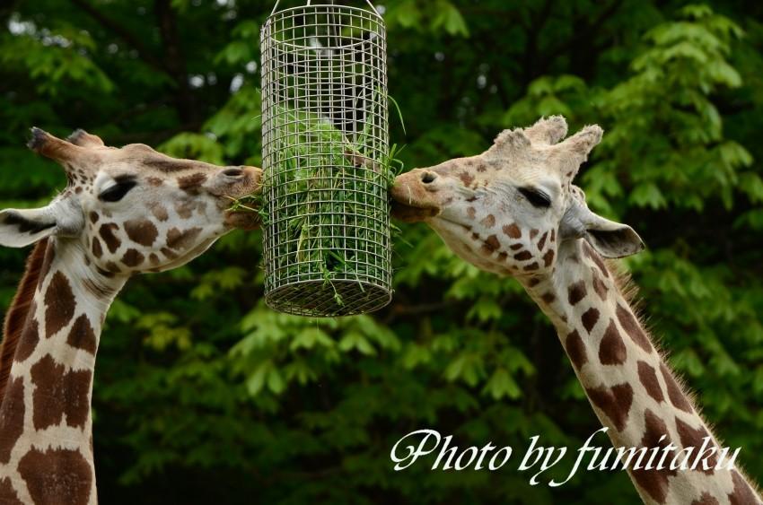 東山動物園430 (37)