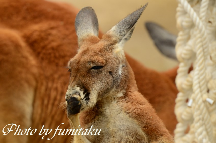 東山動物園430 (55)