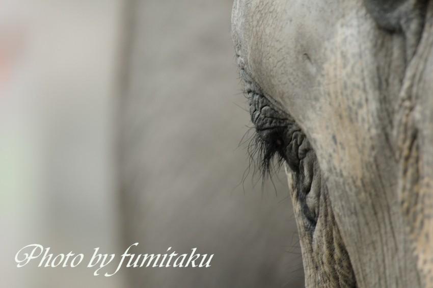 東山動物園430 (44)