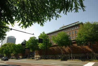 県庁前のカツラ並木