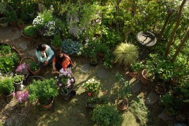 ばあちゃんの庭