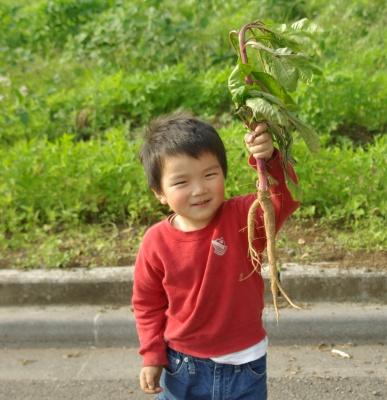 ヤマゴボウの根っこ