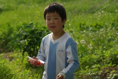 クサイチゴ大収穫