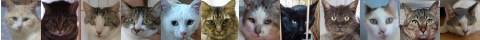 130314cats-s
