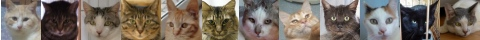 130426cats-s