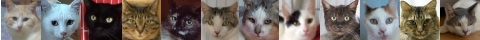 130516cats-s
