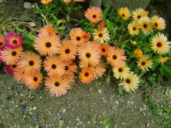 お花満開1
