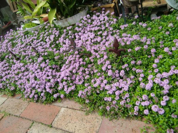 お花満開2