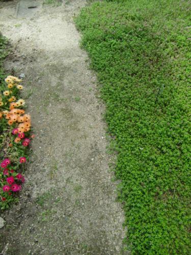 お花の道を作りました