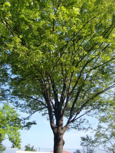 大きな木の下で休憩