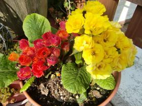 3月25日なんの花