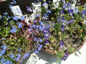 6月7日紫