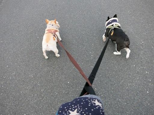 12-13普段のお散歩