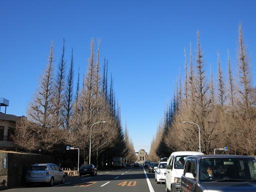 1-13イチョウ並木