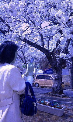 Photo2037.jpg