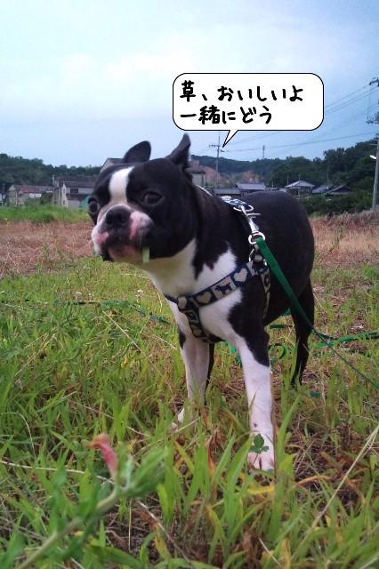 20110731_054111.jpg