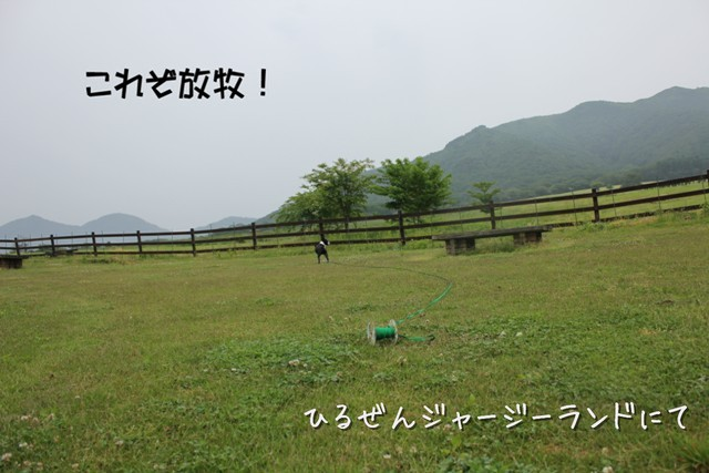 IMG3_36941.jpg