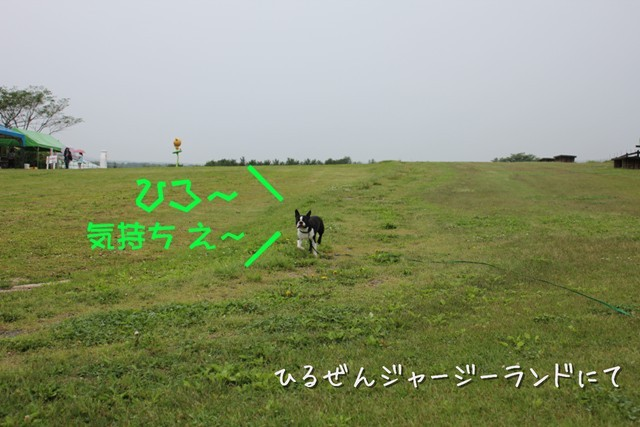 IMG3_36951.jpg