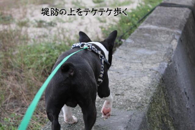 IMG3_4155.jpg