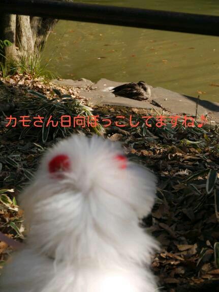 CYMERA_20140121_151621.jpg