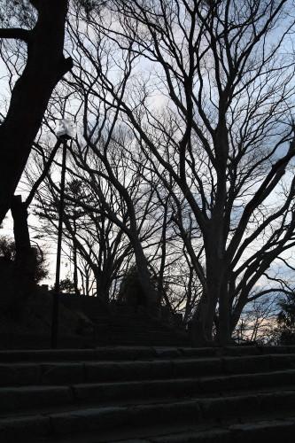 20120408 公園の木