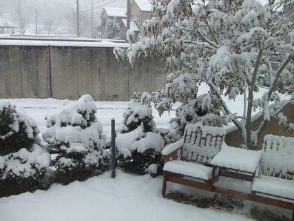 2011年雪